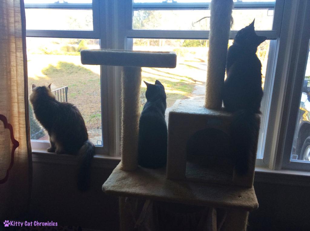 Window Kitties - Spring Time