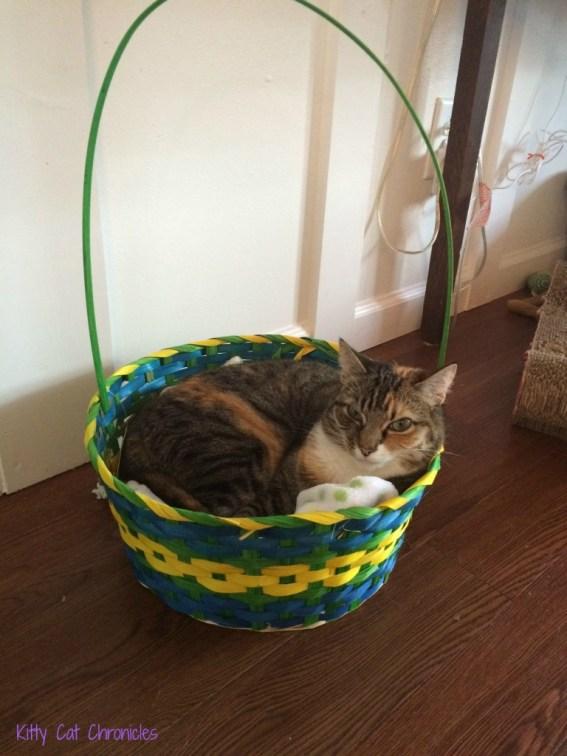 Delilah cat in Easter Basket