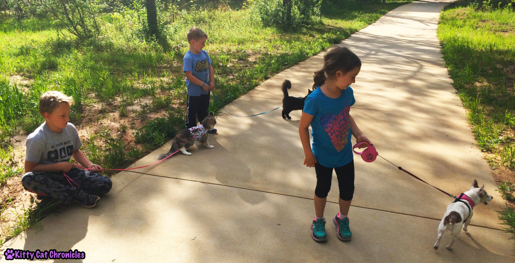 The KCC Gang, cats on leashes - Amerson River Park