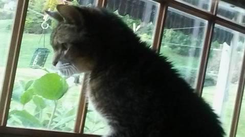 McDermott CH Cat
