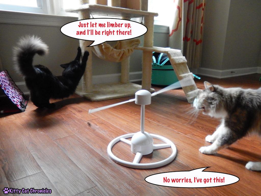 cats with PetSafe Flitter