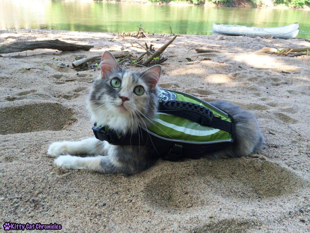 Sophie Cat in Life Vest