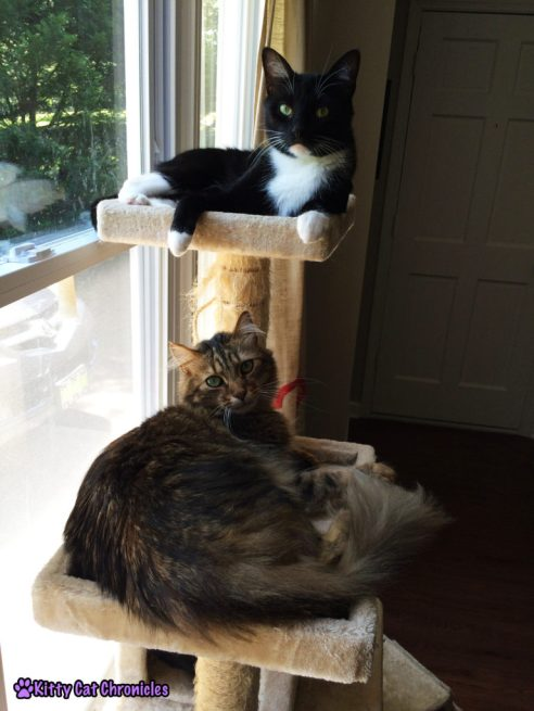 cats on cat tree- just a couple of bros