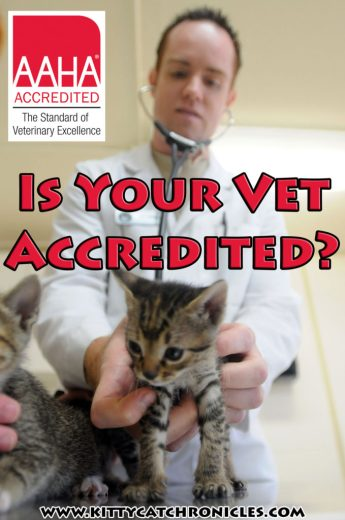 Is Your Vet AAHA Accredited?
