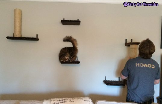 Caster is Excited about Cat Wall Additions