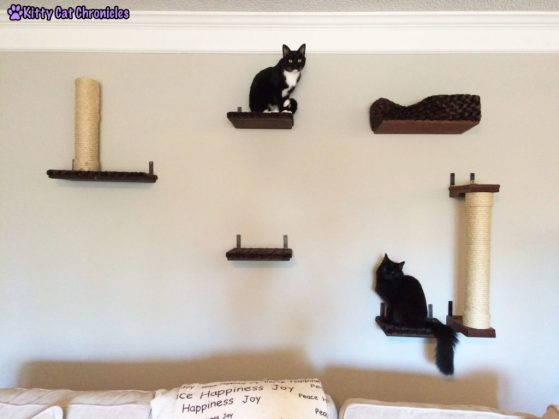 Sampy and Kylo on the Cat Wall