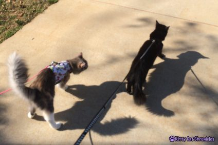 Sophie & Kylo on Leashes