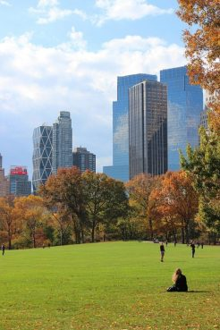Best Places for Cat Lovers & Adventure Cats: Central Park, New York City