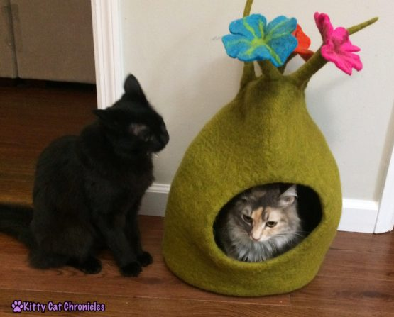 The Ongoing Battle for Sophie's Karma Cat Cave