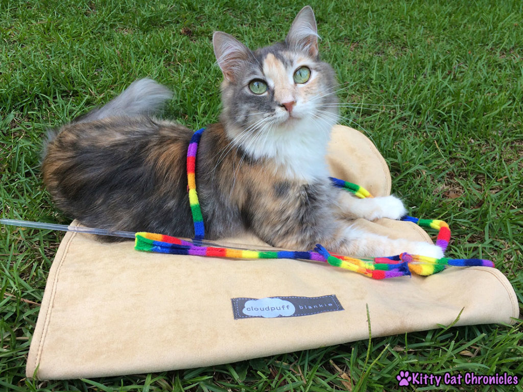 Get the Gear! 10 Must Have Accessories for Your Adventure Cat - Sophie with her favorite toy on her Cloudpuff Blankie