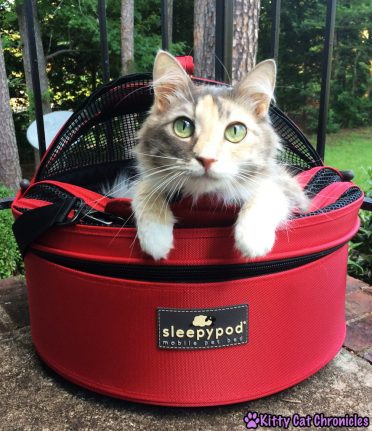 Get the Gear! 10 Must Have Accessories for Your Adventure Cat - Sophie in her Sleepypod Mobile Pet Bed
