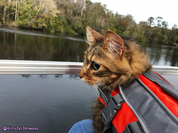 The KCC Adventure Team Tours the St. John's River - Caster, cat in life jacket