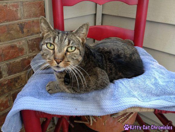 Sassy Cat sleeping in flower pot