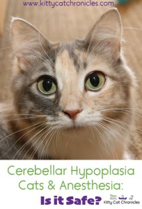 Cerebellar Hypoplasia Cats & Anesthesia: Is it Safe?