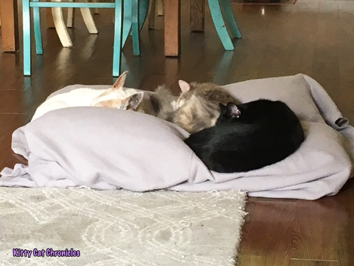 Sophie & Lucy's Birthday Adventure - cats and dog on bed