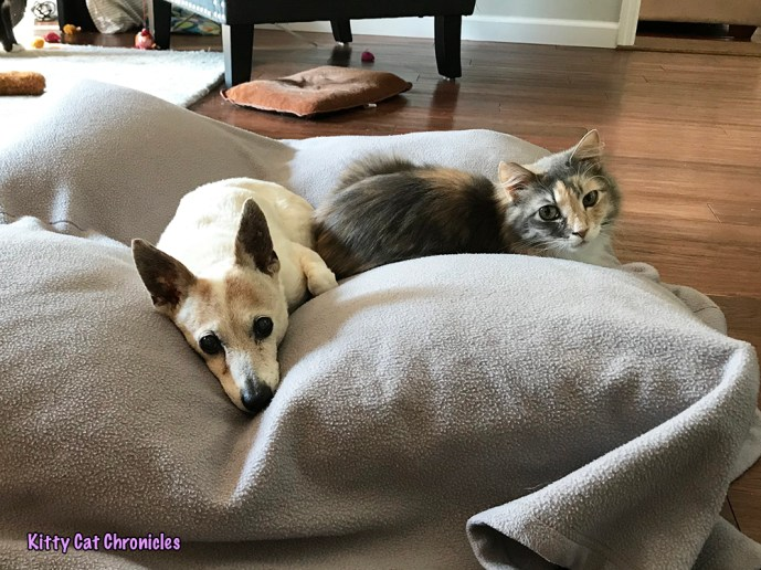 Wordless Wednesday: The Best Pet Bed in the Universe