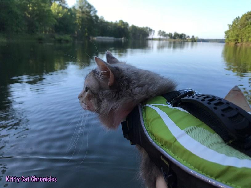 The KCC Adventure Team Canoes Lake Juliette - Sophie cat on canoe