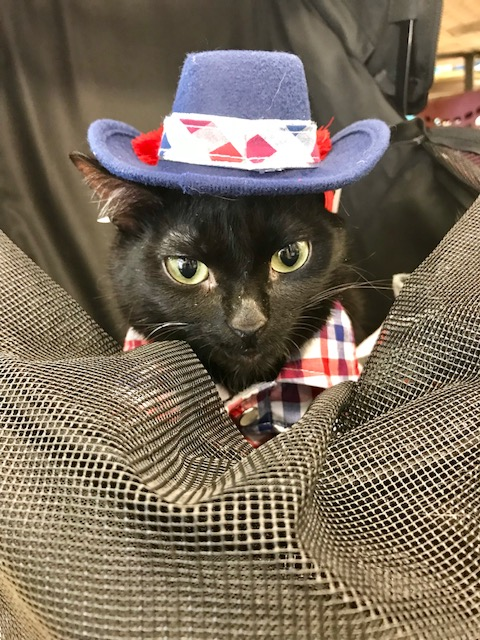 Mr. Wobbles - cat in hat