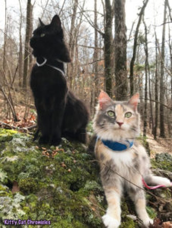 Kylo Ren's Birthday Hike at Brown's Mount - hiking cats
