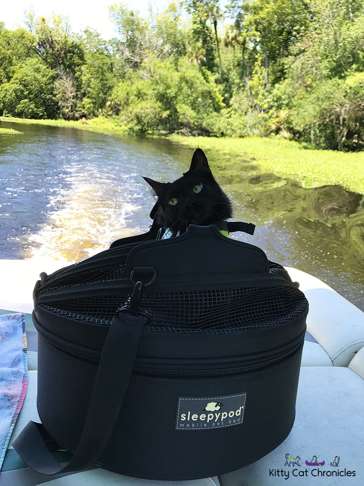 Kylo Ren and the 3-Hour Boat Tour - cat in a Sleepypod on a boat