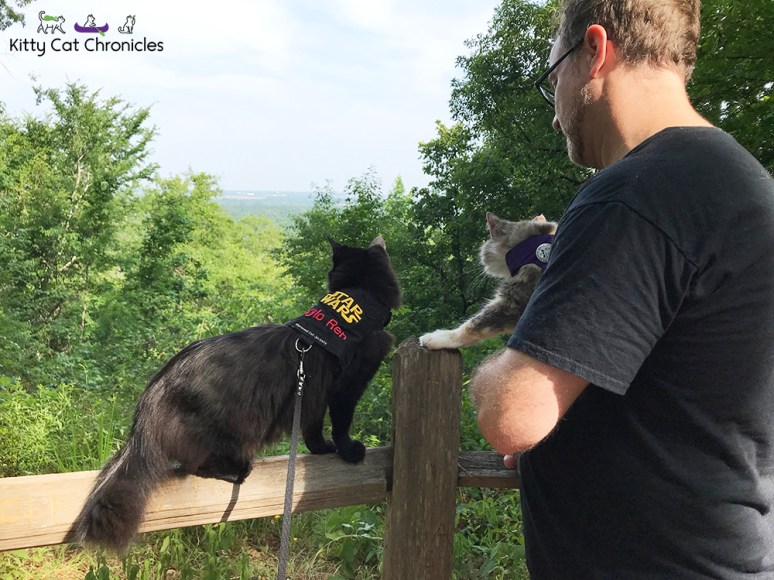 Sophie's Birthday Adventures - Brown's Mount & Amerson River Park - cats observing overlook on Brown's Mount hiking trail