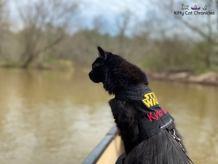 Our Athens Getaway - black cat canoeing
