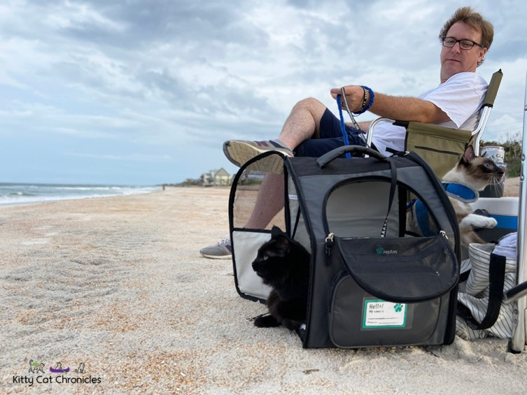 Florida Beach Days with Kylo Ren and Gryphon - cats on the beach