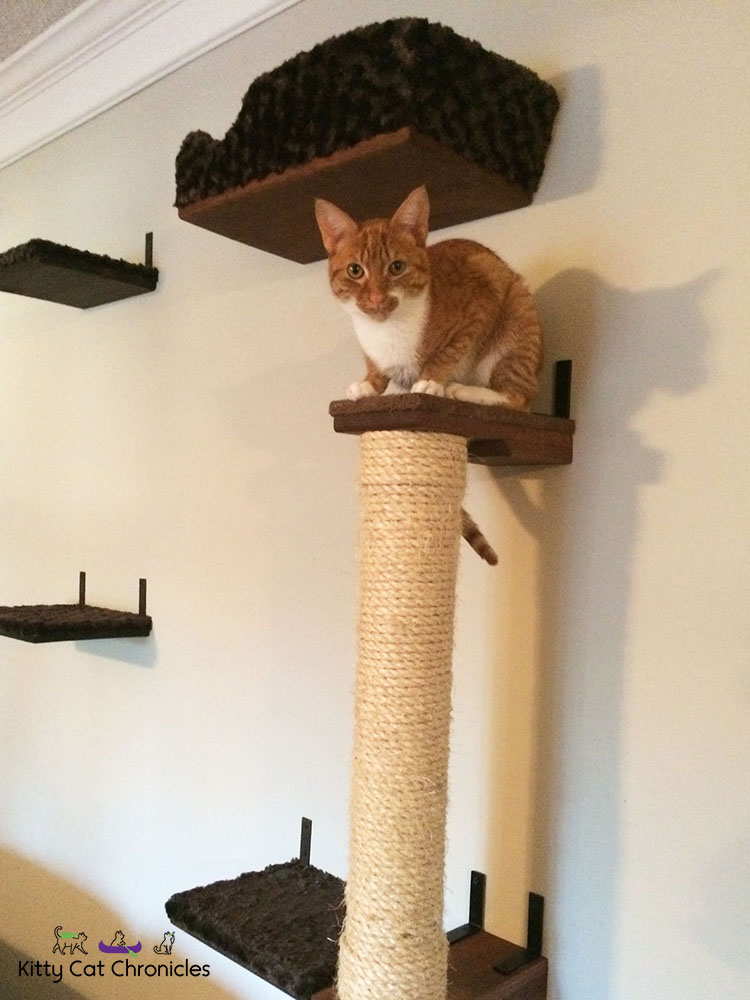 orange tabby cat on top of a cat scratcher