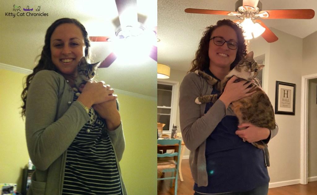 kitten and cat photos