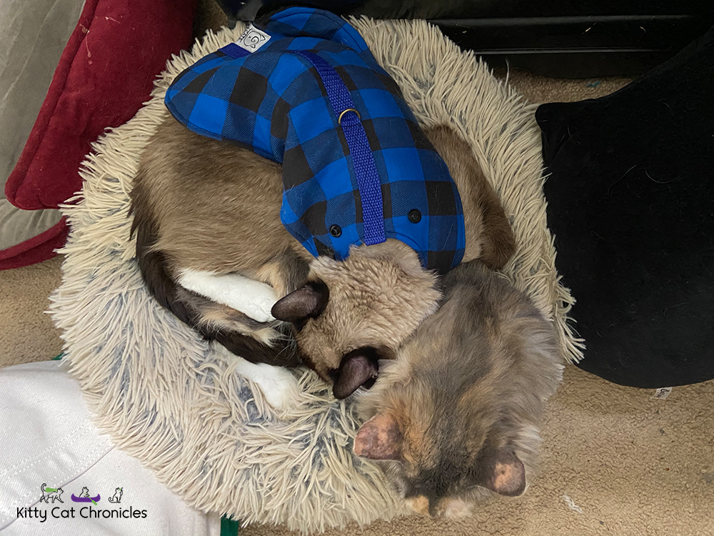 cats snuggling in cat bed
