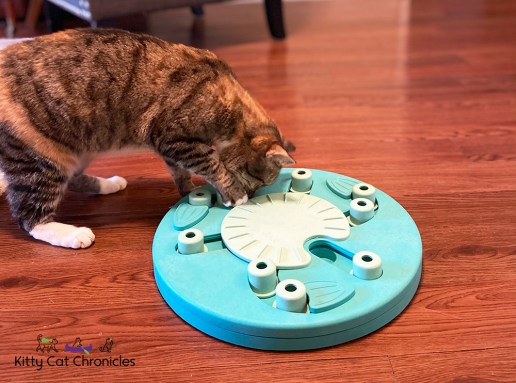 cat with nina ottosson food puzzle