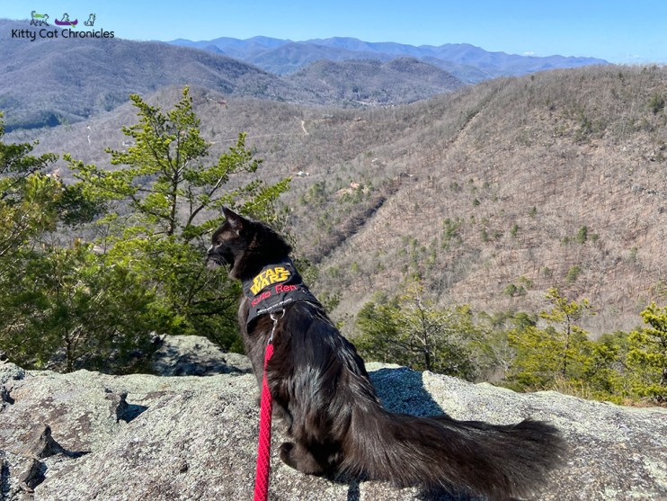 cat at Pinnacle Knob - mountain overlook