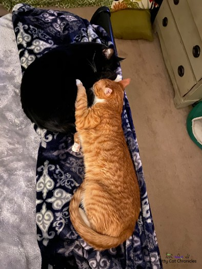 two cats snuggling on a bed
