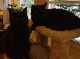 Cats3