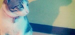 Kesya kucing Fitri
