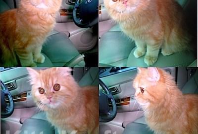 Gwen kucing milik Sofia