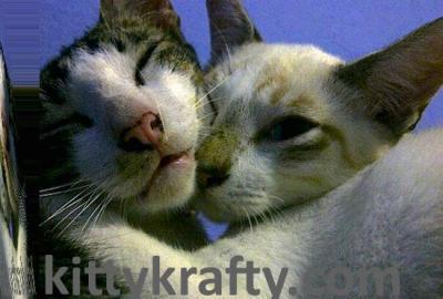 Vico kucing Sifa