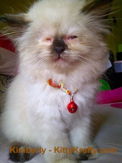 Kucing Pembaca: Kimberly - Dewi Galung