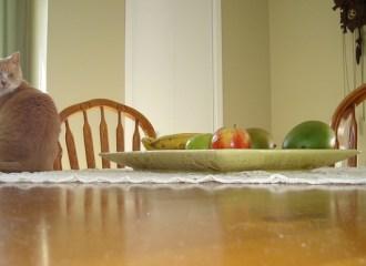 kucing melompat ke meja makan