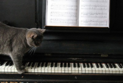 kucing main piano
