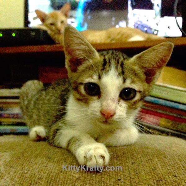 kittykrafty.com
