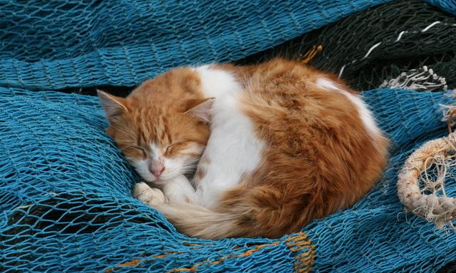 Memberi Makan Kucing Yang Sedang Sakit
