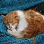 Cara memberi makan kucing sakit
