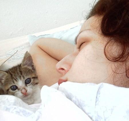 Tidur bersama kucing