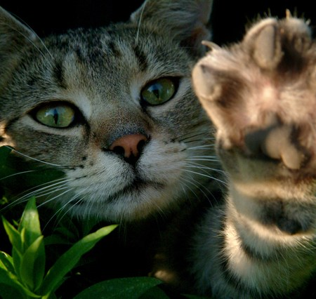 Mengatasi kucing yang suka mencakar