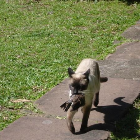 ketika kucing hobi berburu