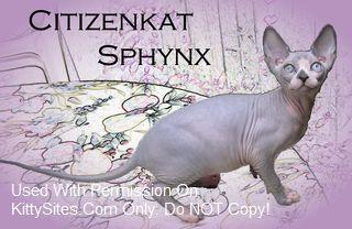 Citizenkat Sphynx