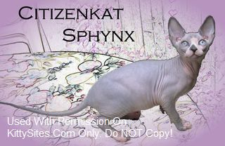 Citizenkat Sphynx