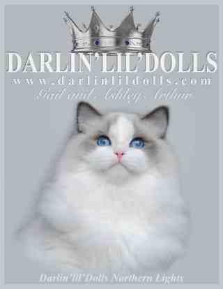 Darlin'lil'Dolls Ragdoll Cattery