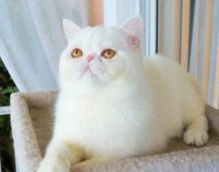 Exotic Kit Cats
